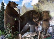 Three stuffed bears. Royalty Free Stock Photo