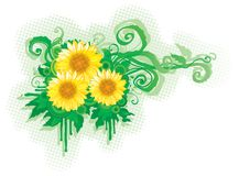 Three  sunflowers Royalty Free Stock Photo