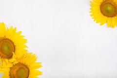 Three sunflowers. Isolated on white background Stock Photography