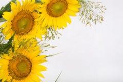 Three sunflowers. Isolated on white background Stock Image
