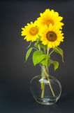 Three sunflowers in vase with water. Royalty Free Stock Photo