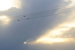 Three swallows Royalty Free Stock Photos