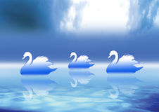 Three Swans  Royalty Free Stock Photos