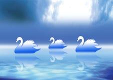 Three Swans Royalty Free Stock Photos