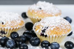 Three sweet blueberry muffins with powdered sugar on slate Royalty Free Stock Image