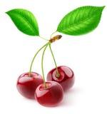 Three sweet cherries Stock Photography