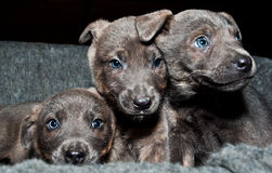 Three sweet pups want a lot of love. They are in a shelter, orphan and sad, wait for you Royalty Free Stock Image