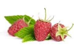 Three sweet ripe raspberries Royalty Free Stock Image