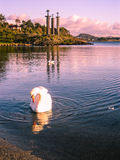 Three Swords and a Swan. White swan in front of the Three Swords Monument at sunset. In Stavanger, Norway Stock Photos