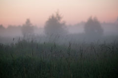Three symmetrical silhouettes of trees in a misty field during summer night fog Royalty Free Stock Photography