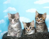 Three tabby kittens sitting on a black and gray bed royalty free stock photography