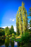 Three tall trees  by a pond Royalty Free Stock Photo