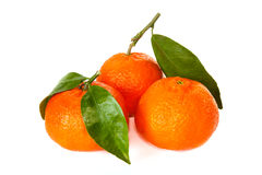 Three tangerines with stem and leaf Royalty Free Stock Photography