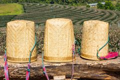 Three tea picker bags or basket on big log Stock Image