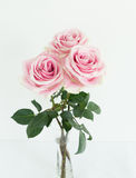 Three tean pink and white roses together. On white vertical background three garden pink and white roses with green leaves Stock Photography