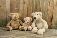 Three teddy bears seated against a wooden wall Stock Photos