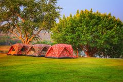 Three tents for camping with natural area. In the forest royalty free stock images