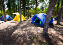 Three tents in the campsite area in the beautiful forest.  royalty free stock images