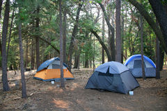Three Tents Set up in the Lush Green Woods Royalty Free Stock Photography