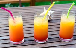 Three tequila sunrise cocktails Royalty Free Stock Photos