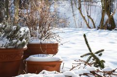 Three terracotta plant pots in snowy garden at winter time. Three terracotta plant pots in a garden covered with snow at winter time royalty free stock image
