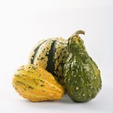 Three textured gourds Royalty Free Stock Photos