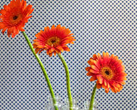 Three Tiering Vibrant Flowers stock photography