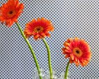 Three Tiering Vibrant Flowers Stock Photography