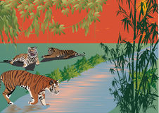 Three tigers near river in forest Royalty Free Stock Photo
