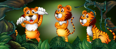 Three tigers in the rainforest Royalty Free Stock Photos