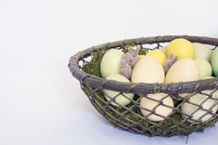 Three Tiny Felted Bunnies or Rabbits Hide in Basket of Pale Colo stock image