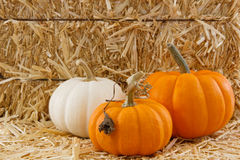 Three tiny pumpkins against a straw background royalty free stock photo