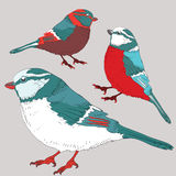 Three tit birds with red, blue and white feathers. Vector illustration on grey background. Hand drawn three birds with red, blue and white feathers on light grey vector illustration