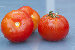 Three tomato. Three wet tomato on a blue table in the rain Stock Photography