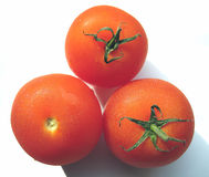 The Three Tomatoes. Three ripe, juicy tomatoes glistening with beads of condensation royalty free stock images