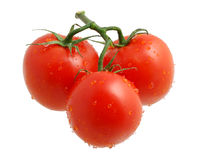 Three tomatoes. Isolated on a white background covered by drops of water Stock Images