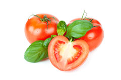 Three tomatoes with basil leafs Stock Image