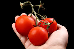 Three tomatoes in caucasian hand isolated on black Royalty Free Stock Image