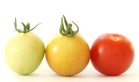 Three tomatoes colorful on white background. Close up view of three colorful - green, orange and red - tomatoes on white background Royalty Free Stock Photo