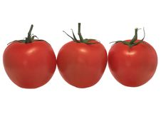 Three tomatoes in line -isolated. Red tomatoes series on white background Stock Photos