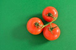 Three Tomatoes on Vine, Isolated on Green. Background Royalty Free Stock Photos