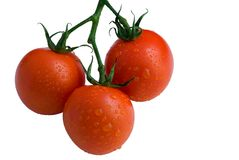 Three tomatoes  with water drops Royalty Free Stock Image