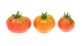 Three tomatoes on white background. Three different tomato isolated on white background Stock Image