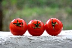Three tomatoes on white walls Stock Photo