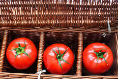 Three tomatoes in wicker box. Three tomatoes with dew lying separately in wicker retro box stock photo