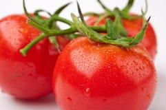 Three tomatos. The close-up of three linked tomatos Royalty Free Stock Image