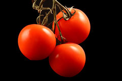 Three tomatos hanging from above isolated on black Royalty Free Stock Photography