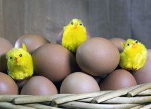 Three toy chickens between eggs in packing Royalty Free Stock Photography