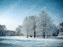 Three tree in a field in winter with falling snow. Blue Stock Images