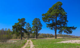 Three tree green. Three trees and bright blue sky Stock Image